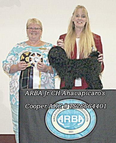 ARBA Jr Champion Ahavpicaro's Cooper